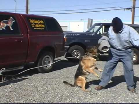 How To Train A Dog For Personal Protection Training Your Dog