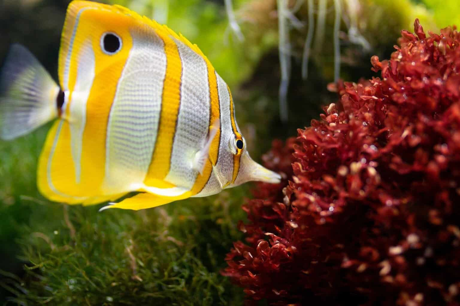 Top 10 Best Reef Safe Fish For Your Saltwater Aquarium Reef Safe Fish Freshwater Aquarium Plants Beautiful Fish
