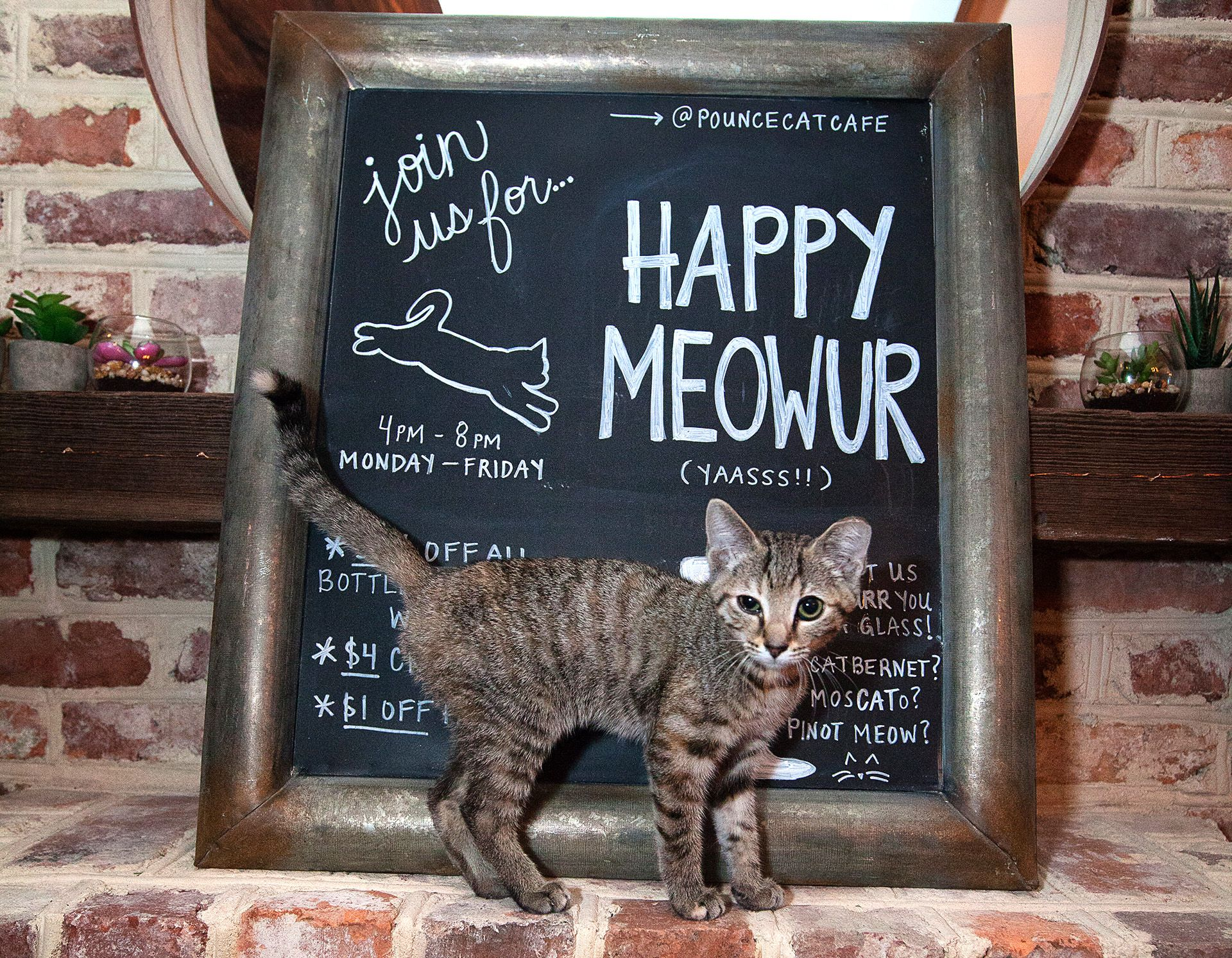 Find The Purrfect Pour At These Cat Cafes Wine Enthusiast Magazine Cat Nap White Kittens Cat Theme