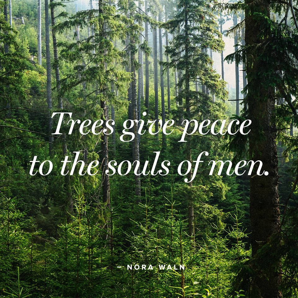 Trees Give Peace To The Souls Of Men So Take A Walk Into The Woods