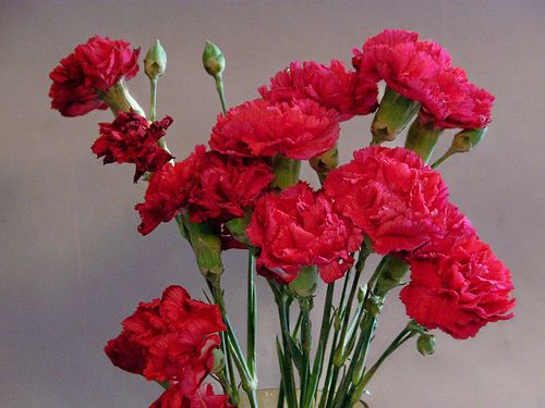 10 Awesome Flowers With Meaning To Offer As A Gift Blommor
