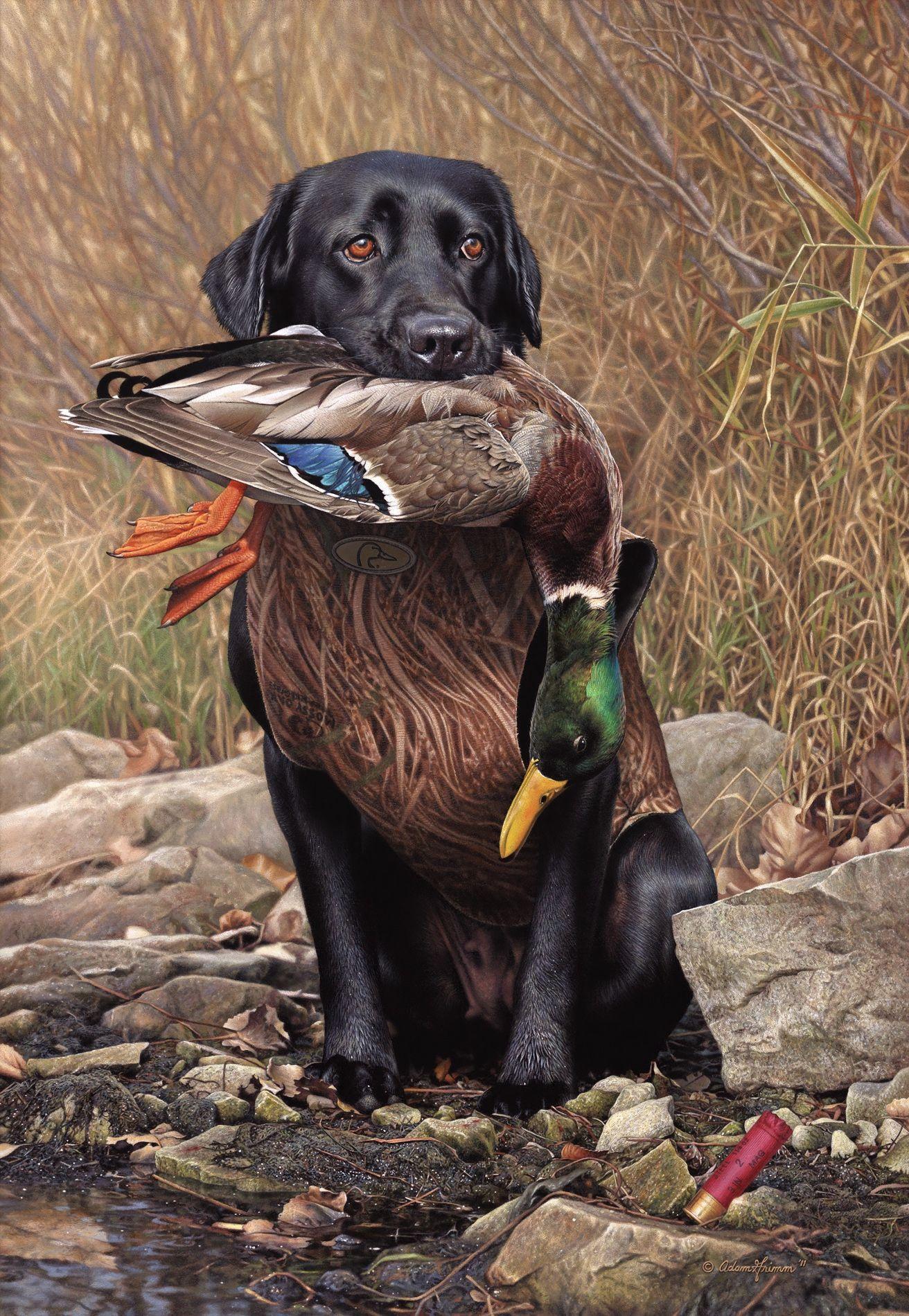 Faithful Adam Grimm Hunting Dogs Dog Paintings Hunter Dog