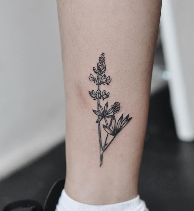Arctic lupine plant for Cheryl!