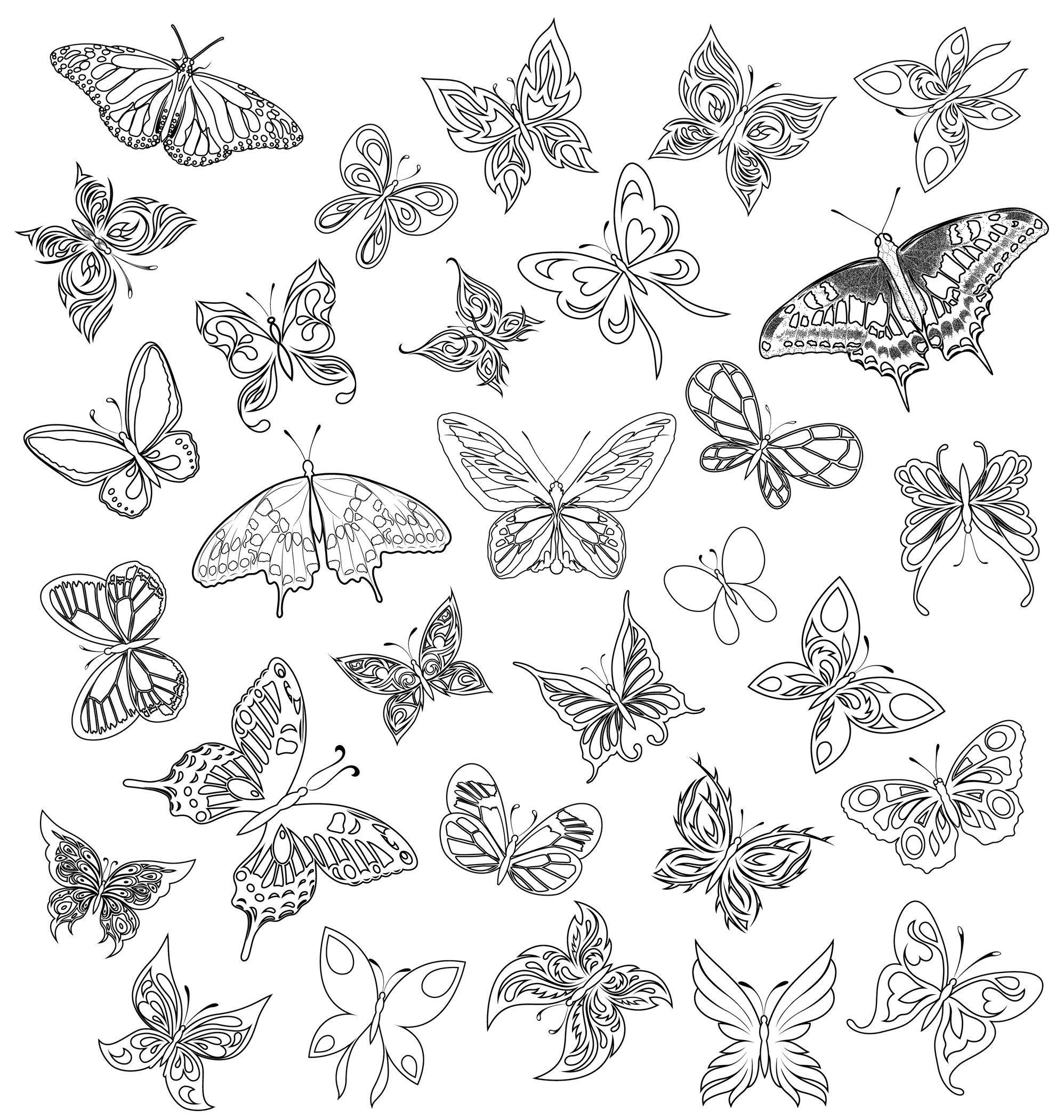 coloriage de papillon butterflies to color pinterest