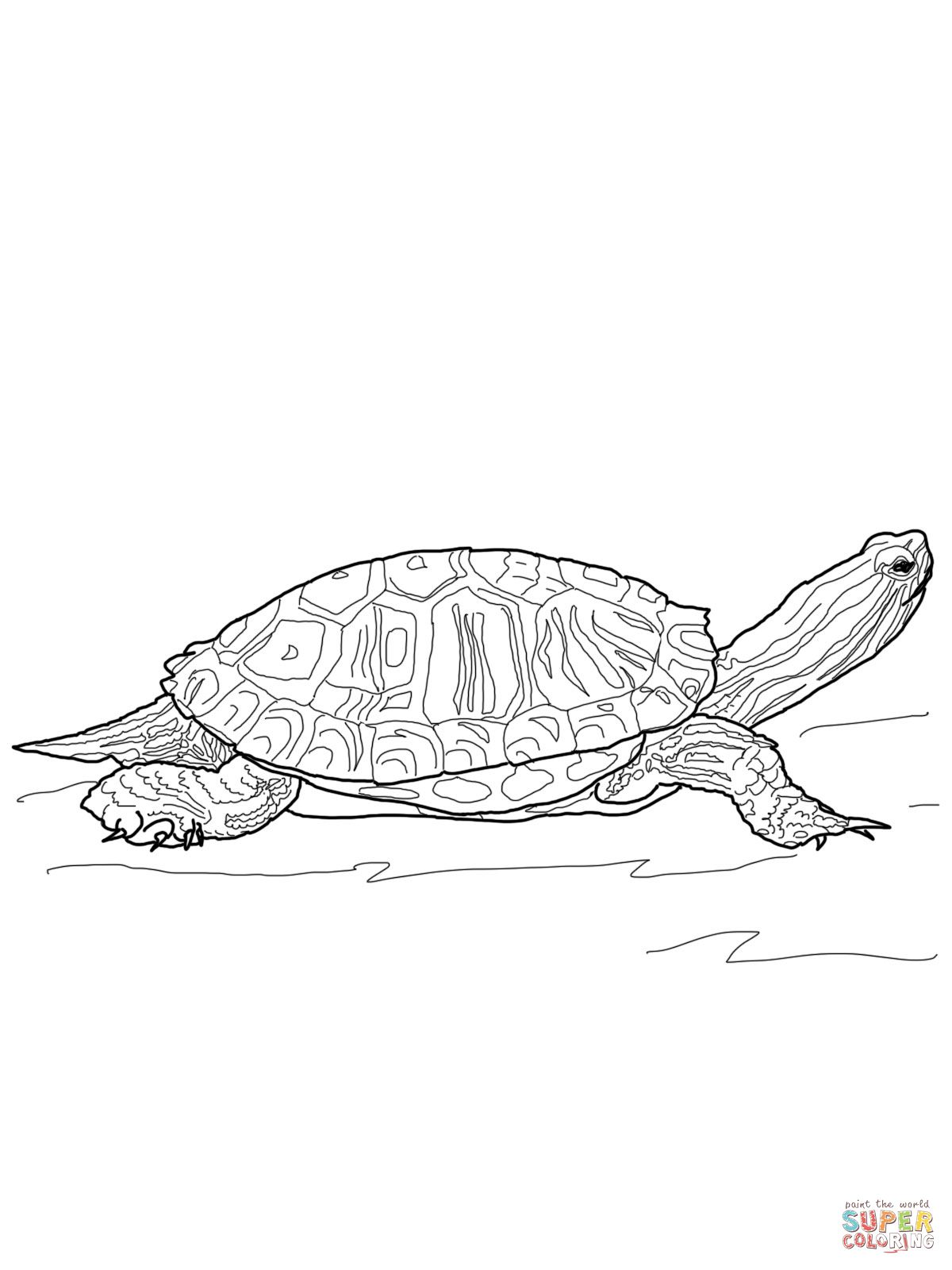 red eared slider turtle outline - Google Search | Nature Study ...