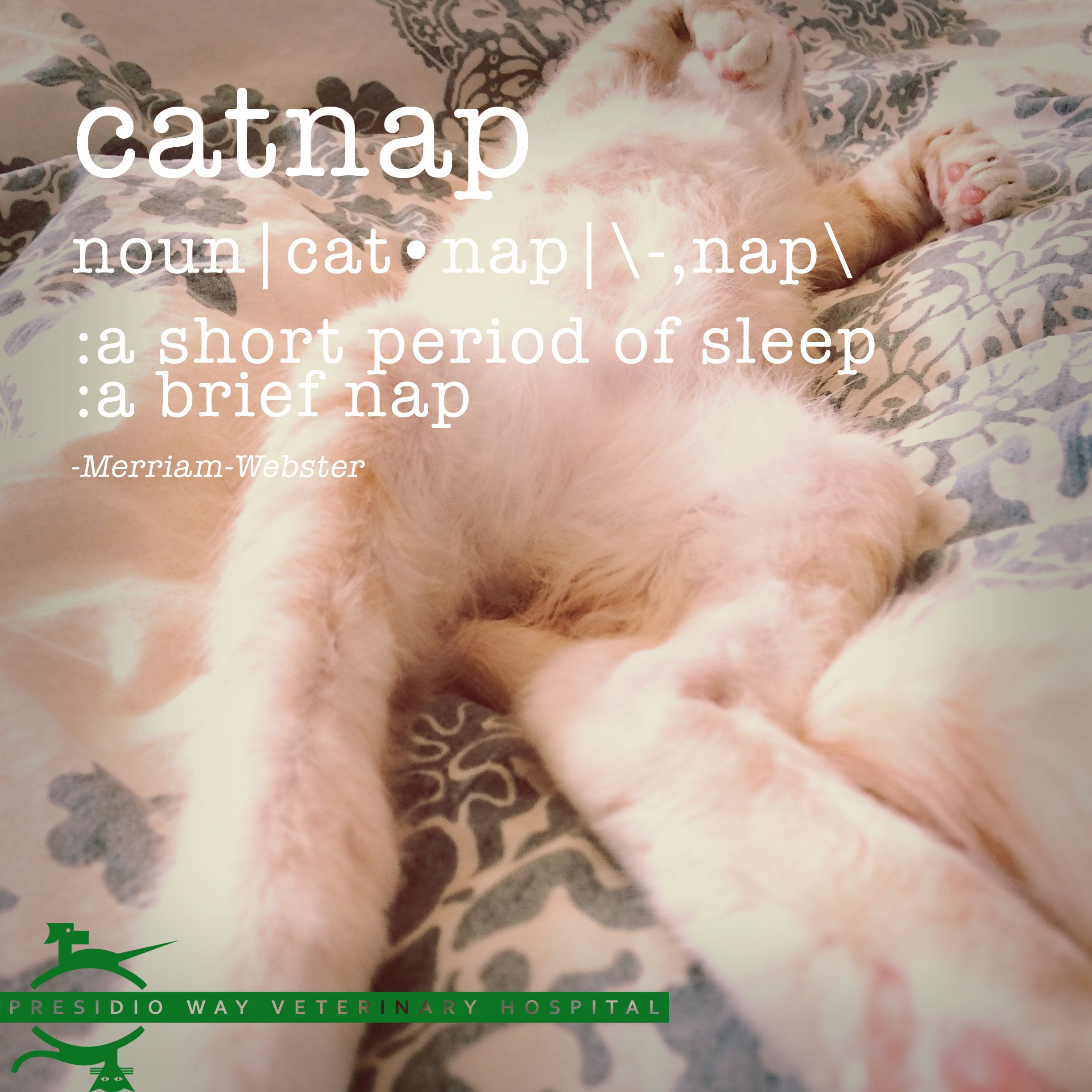 Noun Cat Nap Nap A Short Period Of Sleep A Brief Nap Merriam Webster Presidioway Catnap Sleep Nap Cats Veterinary Hospital Cat Nap Animal Antics