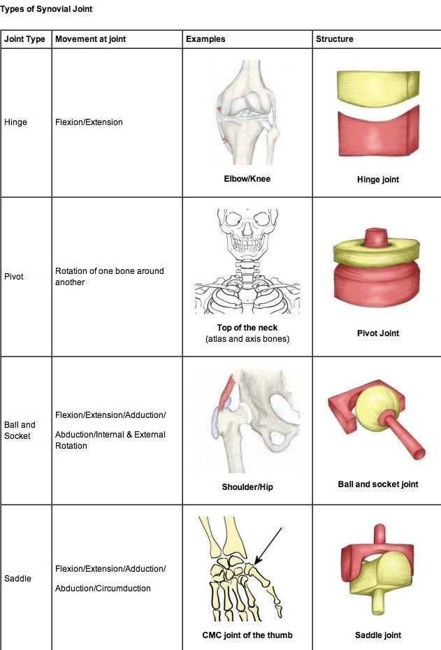 Types Of Joints In The Human Body Types Of Joints Pt Pinterest