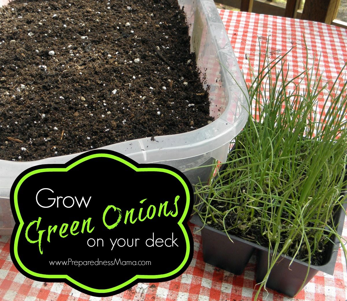 This frugal idea will let you Grow Green Onions on Your Patio all season long. Just purchase a 6 pack of onion sets, put them in a shallow tub and you have cut and come again onions. http://preparednessmama.com/grow-green-onions/
