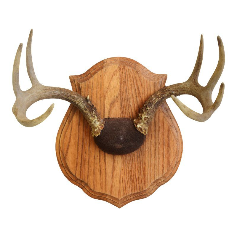 Antler Mounting Kit w// Skull Cover Engraveable Plaque Trophy Mount Wall Display