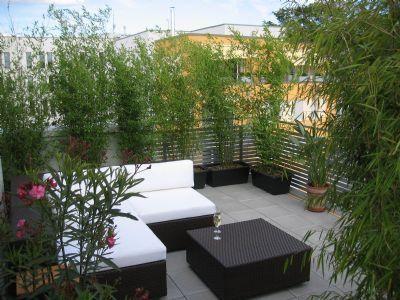 Pflanzen als natürlicher Sichtschutz auf dem Balkon