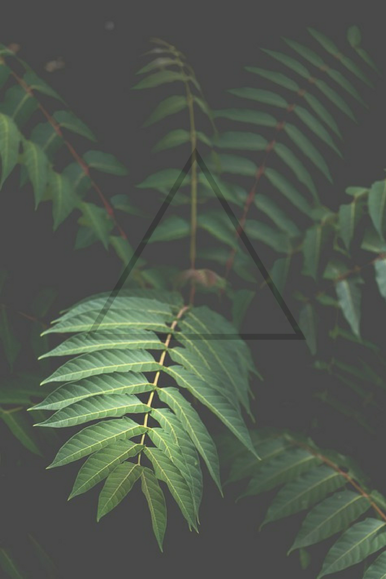 Green Plants Nature Triangle Filter Wallpaper Phone