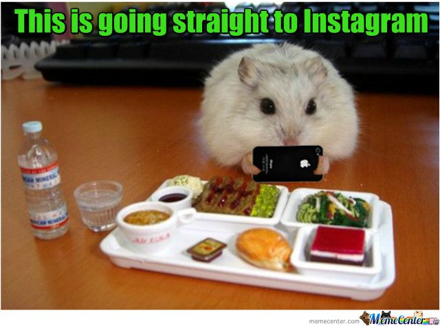 Meme Center Largest Creative Humor Community Funny Hamsters