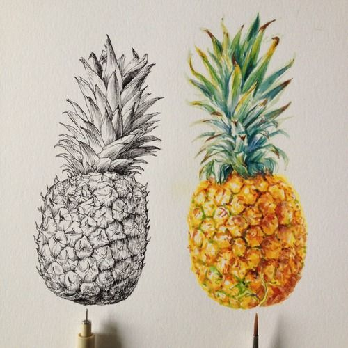 realistic pineapple drawing. pretty drawing art amazing bright tropical pineapple realistic