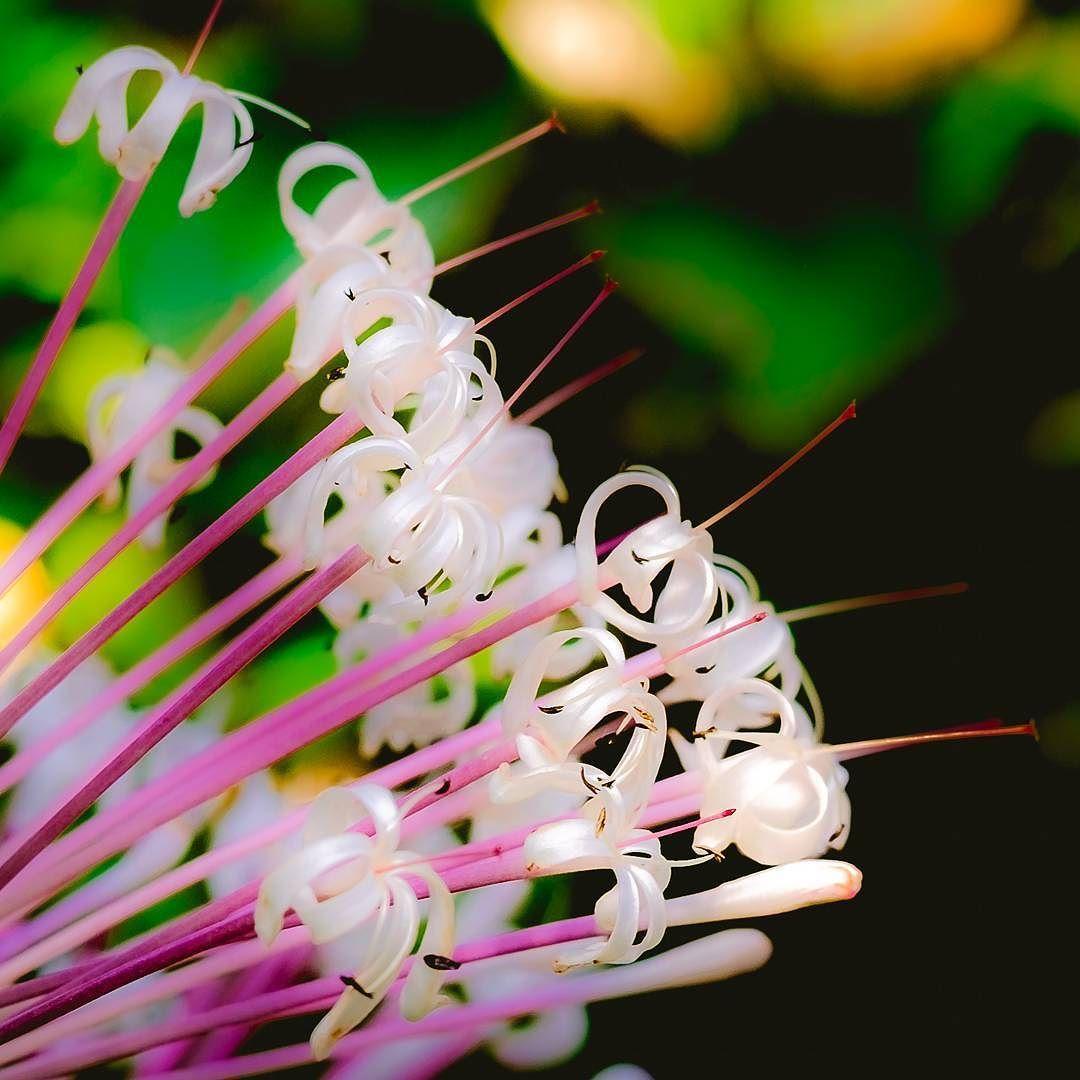 #flower #softfocus #beautiful #pink #butterflygarden #plant #denverbutterflypavillion