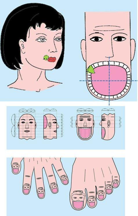 SuJok / Corresponding / Teeth on Fingers   Acupuncture ...