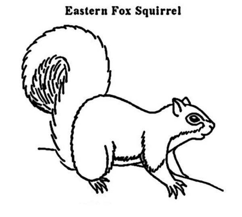 Eastern Fox Squirrel free printable coloring sheets for kids ...