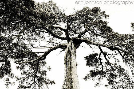 Landscape Photography Tree Photography Black And White Fine Art Nature Decor Croo Landscape Photography Trees Landscape Photography Best Landscape Photography