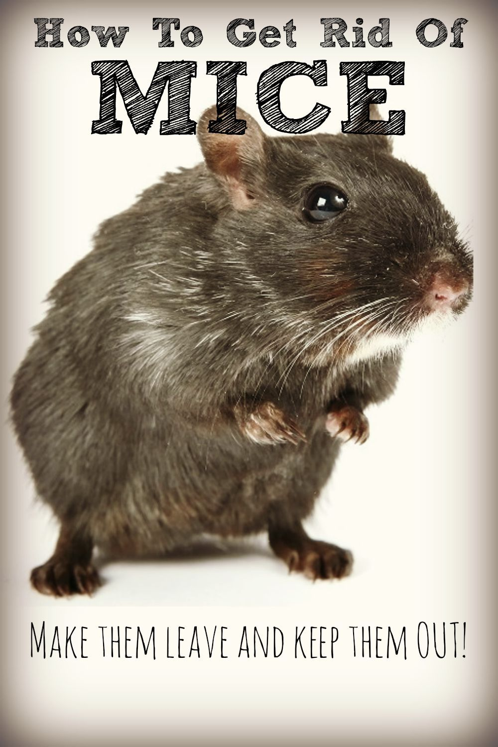 How To Get Rid Of Mice Naturally No Cat Required With Images Getting Rid Of Mice Rodent Control Mice Repellent