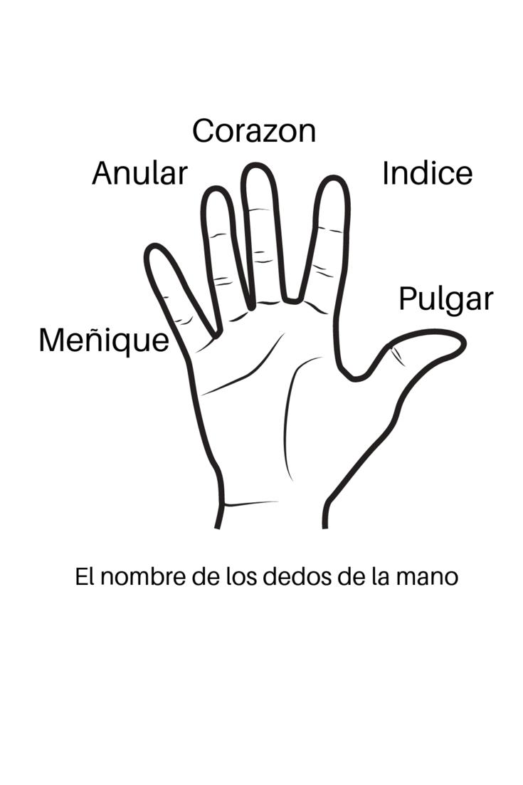 El Nombre De Los Dedos De La Mano Nombres De Los Dedos Dedos De La Mano Ejercicios De Lateralidad