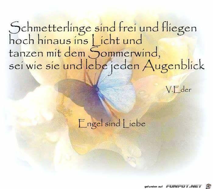 Pin Von Ingrid Monius Auf Vögel Sprüche Schmetterling
