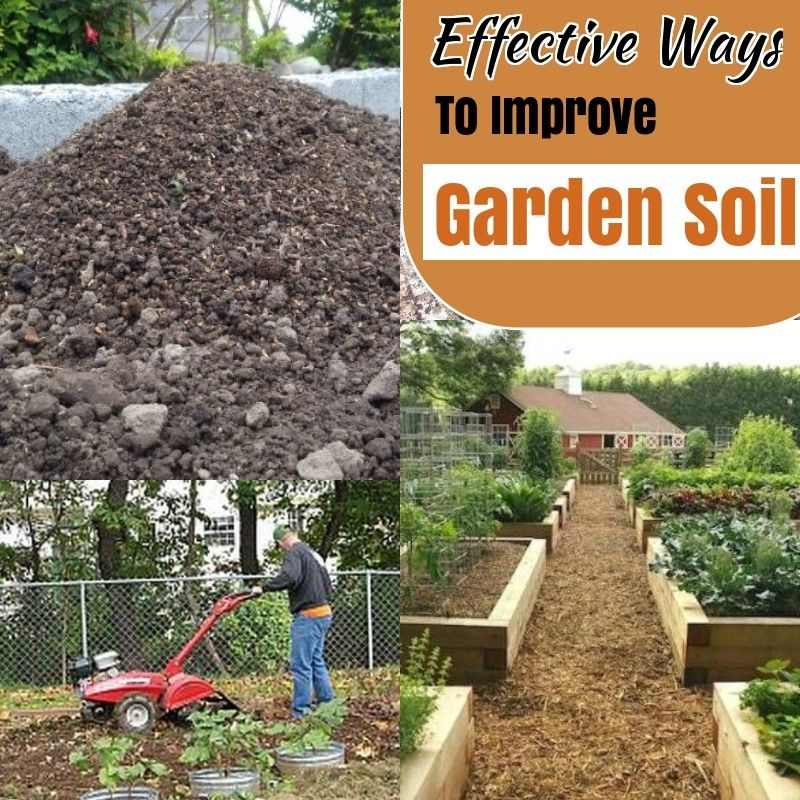 fdaa9b6720b8ec30e75c0aebe3a7ab28 - How To Prepare Soil For Next Year Gardening