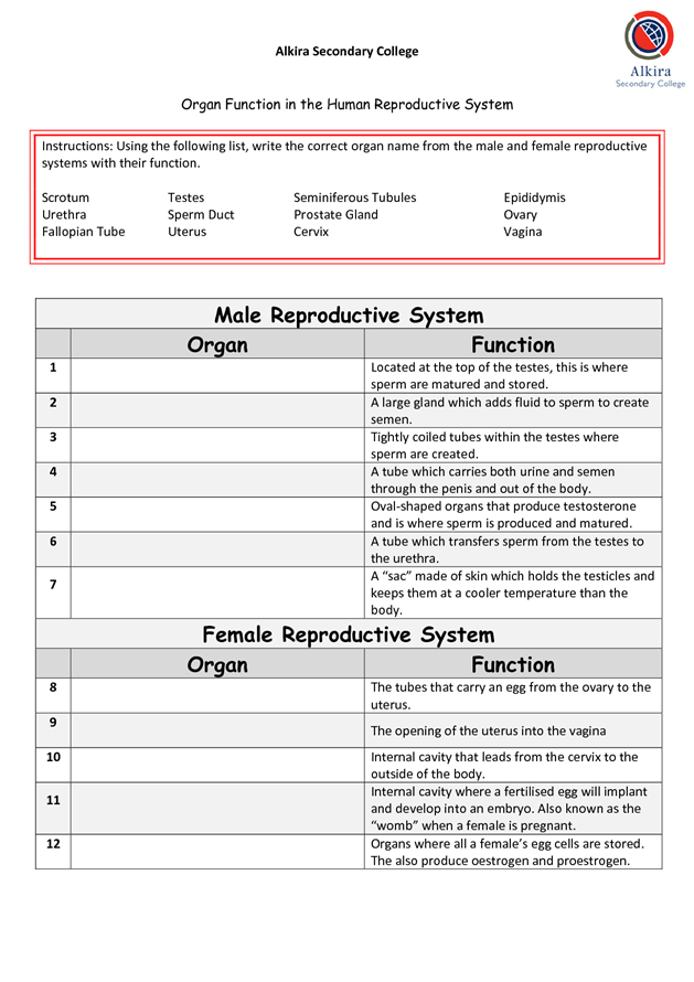 Male Reproductive System Organ Function Female Reproductive System