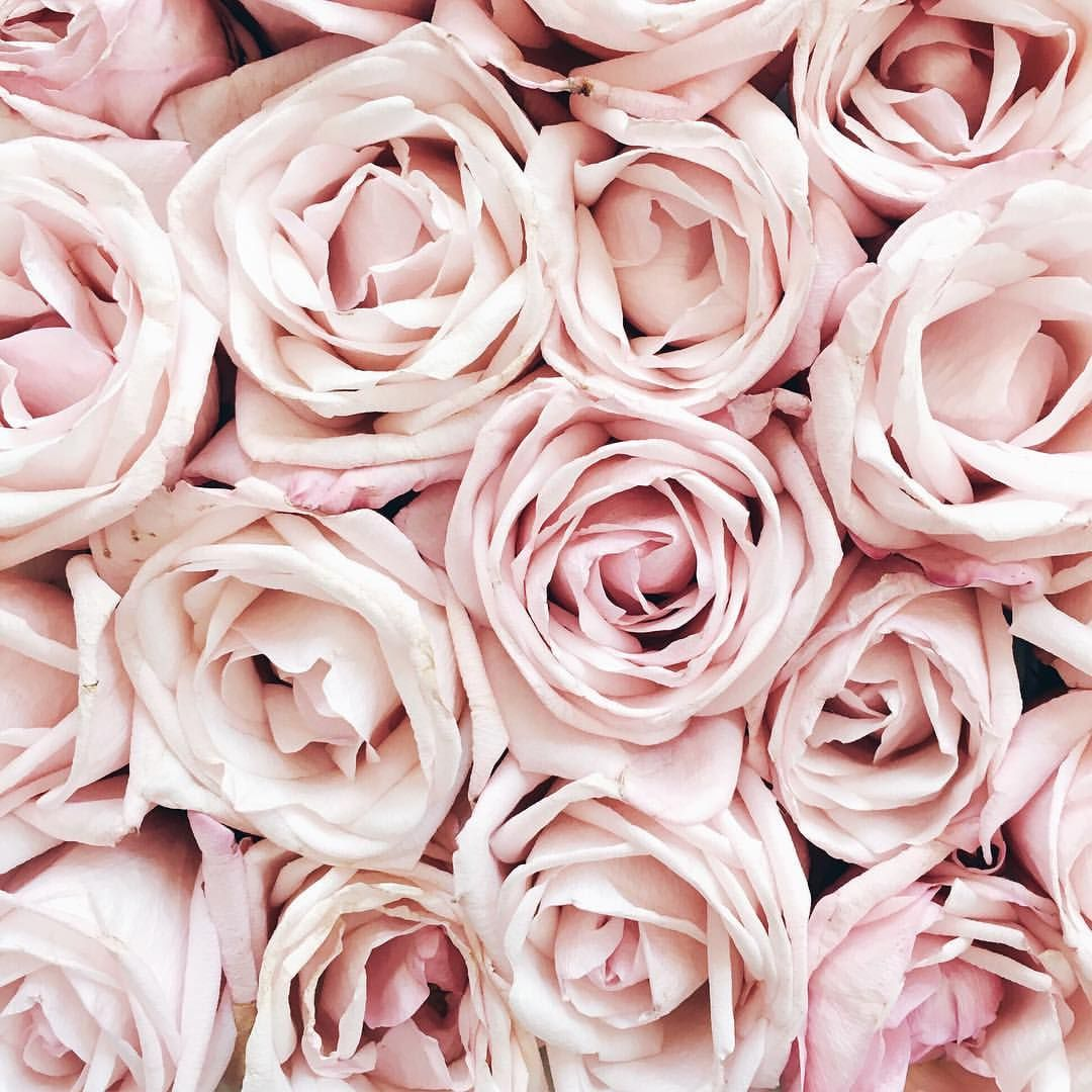 Pink Rose Wallpaper Aesthetic