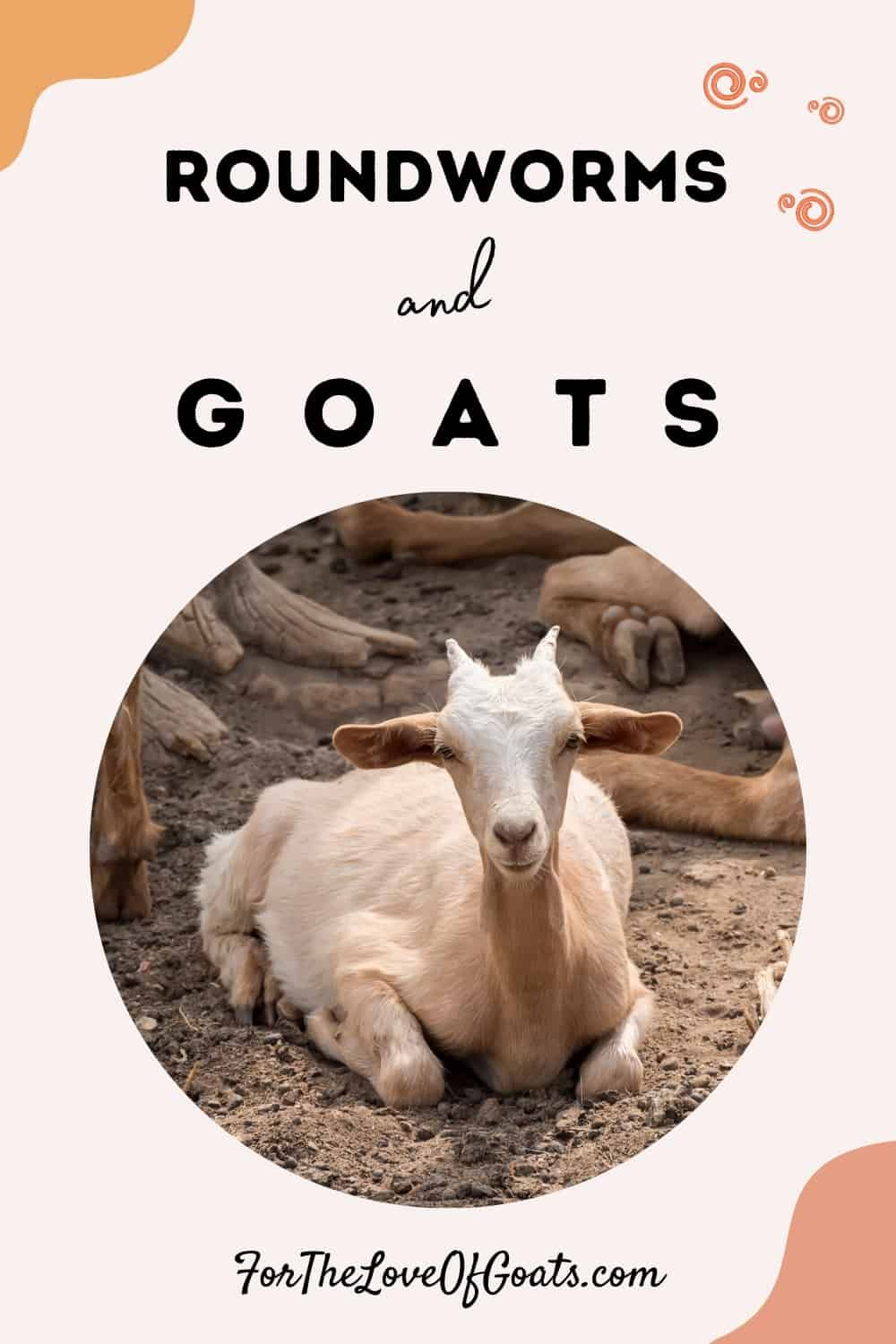 Roundworms And Goats The Thrifty Homesteader In 2020 Roundworm Breeding Goats Raising Goats