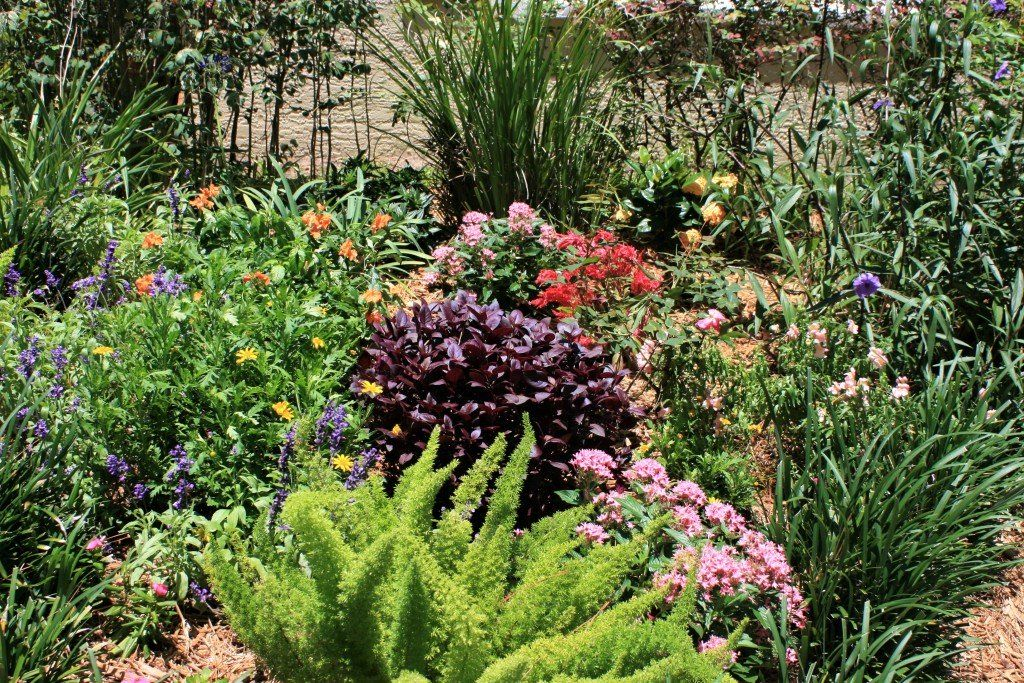 12 Plants That Thrive in the Sun: How to Make Your South ...