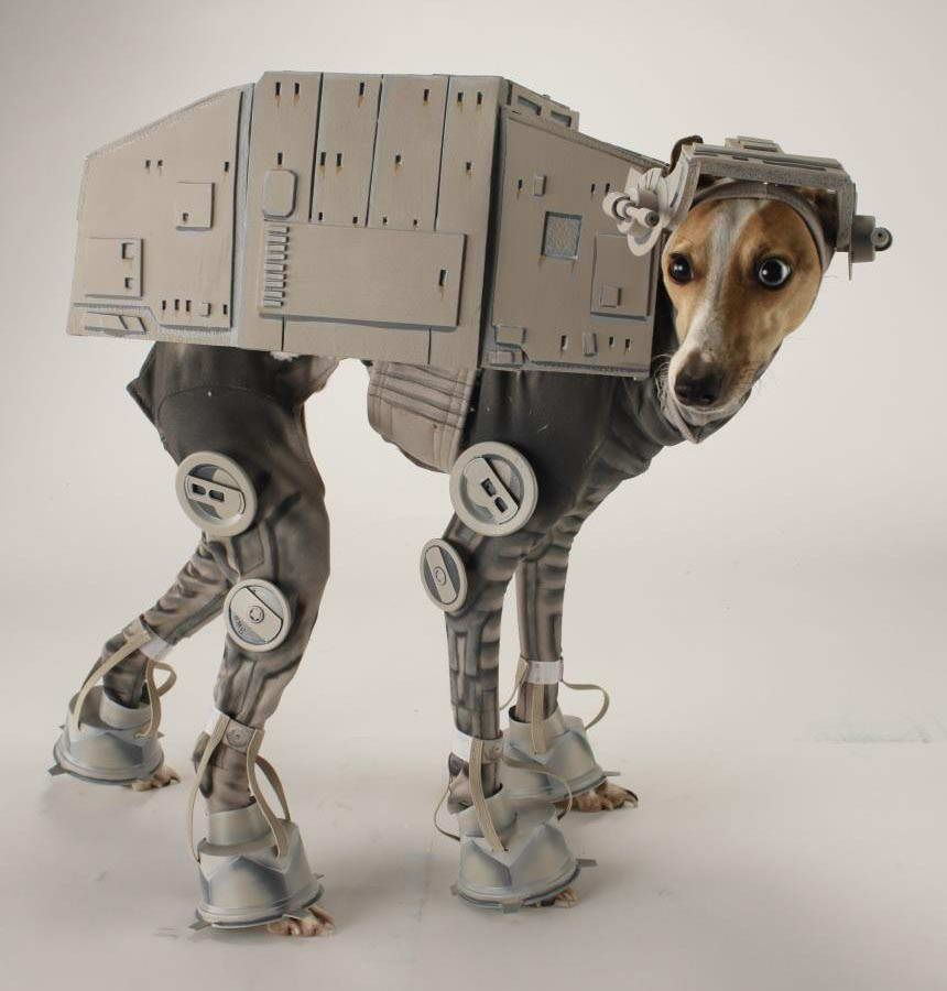 Large Dog Halloween Costumes Star Wars Dog Costumes Best Dog
