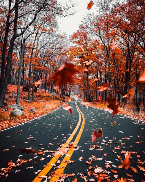 Image about autumn in Hello Fall 🍁🍂🍃 by Ina on We