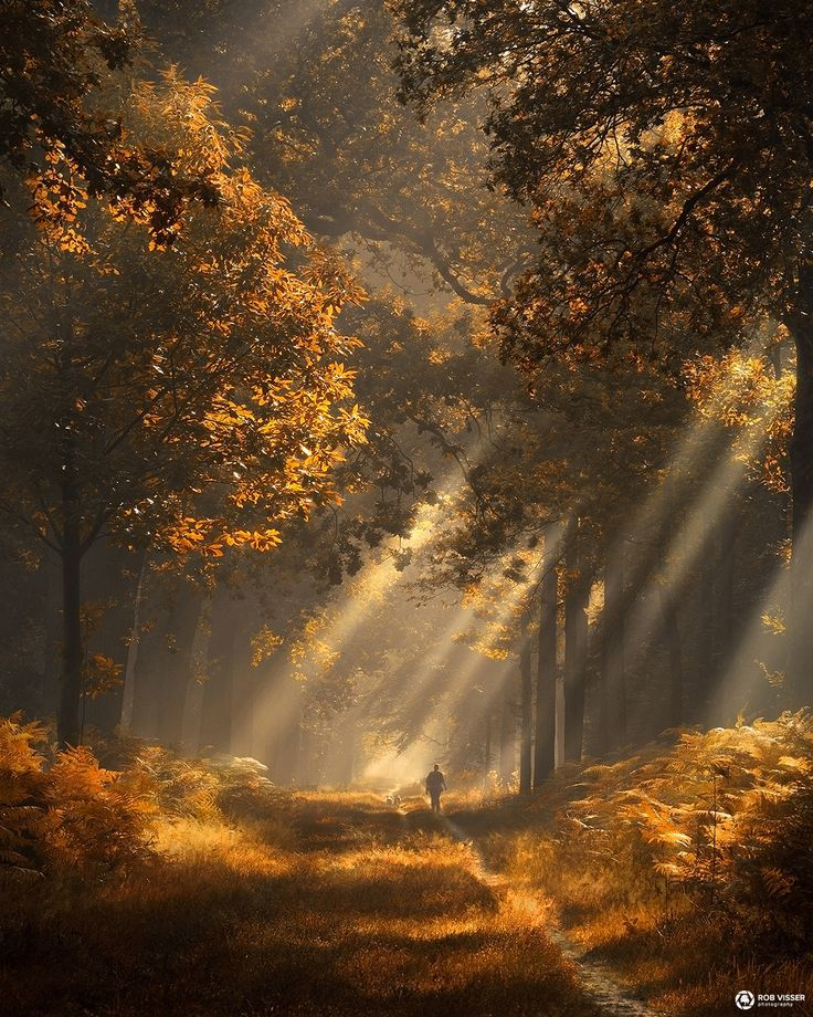 Strings of autumn - Sunrays in a magical autumn forest in the Netherlands.