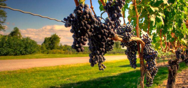 Realizar una cata de vino en las bodegas de Niágara