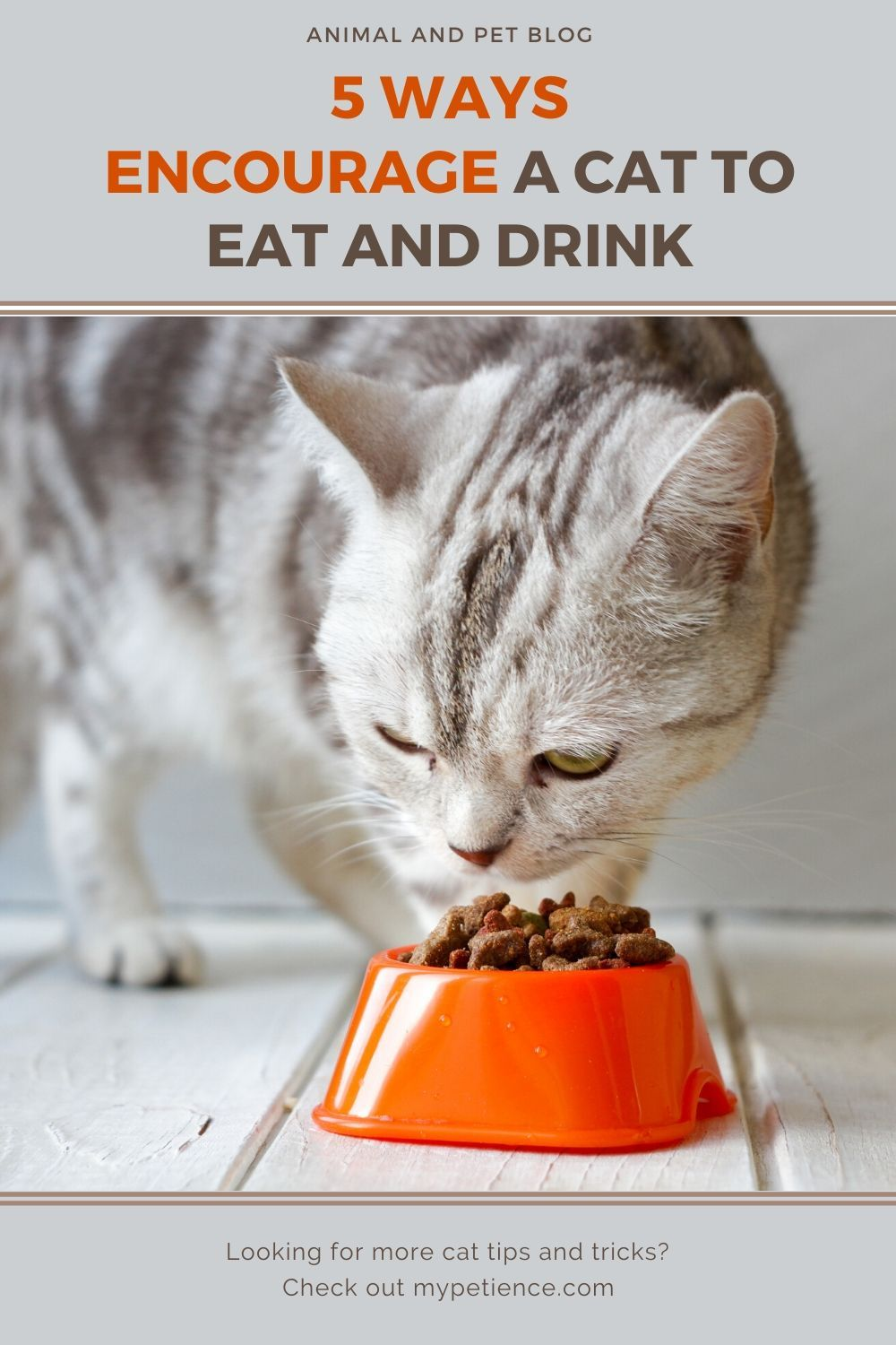 How Long Can a Cat Go Without Water and Food? in 2020