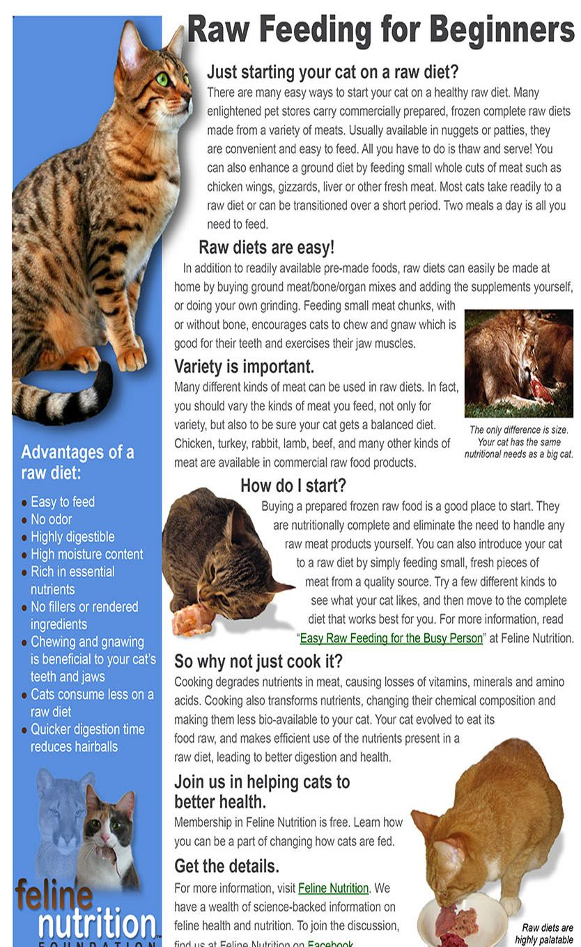Raw Feeding For Cats Cat Guides Cat Nutrition Raw Cat Food Recipes Homemade Cat Food