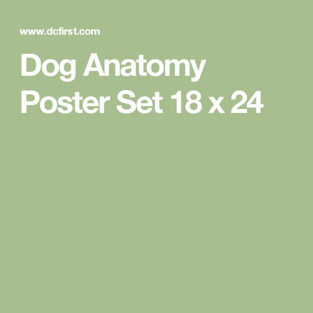 Dog Anatomy 3 Poster Set 18 X 24 My Future Menagerie