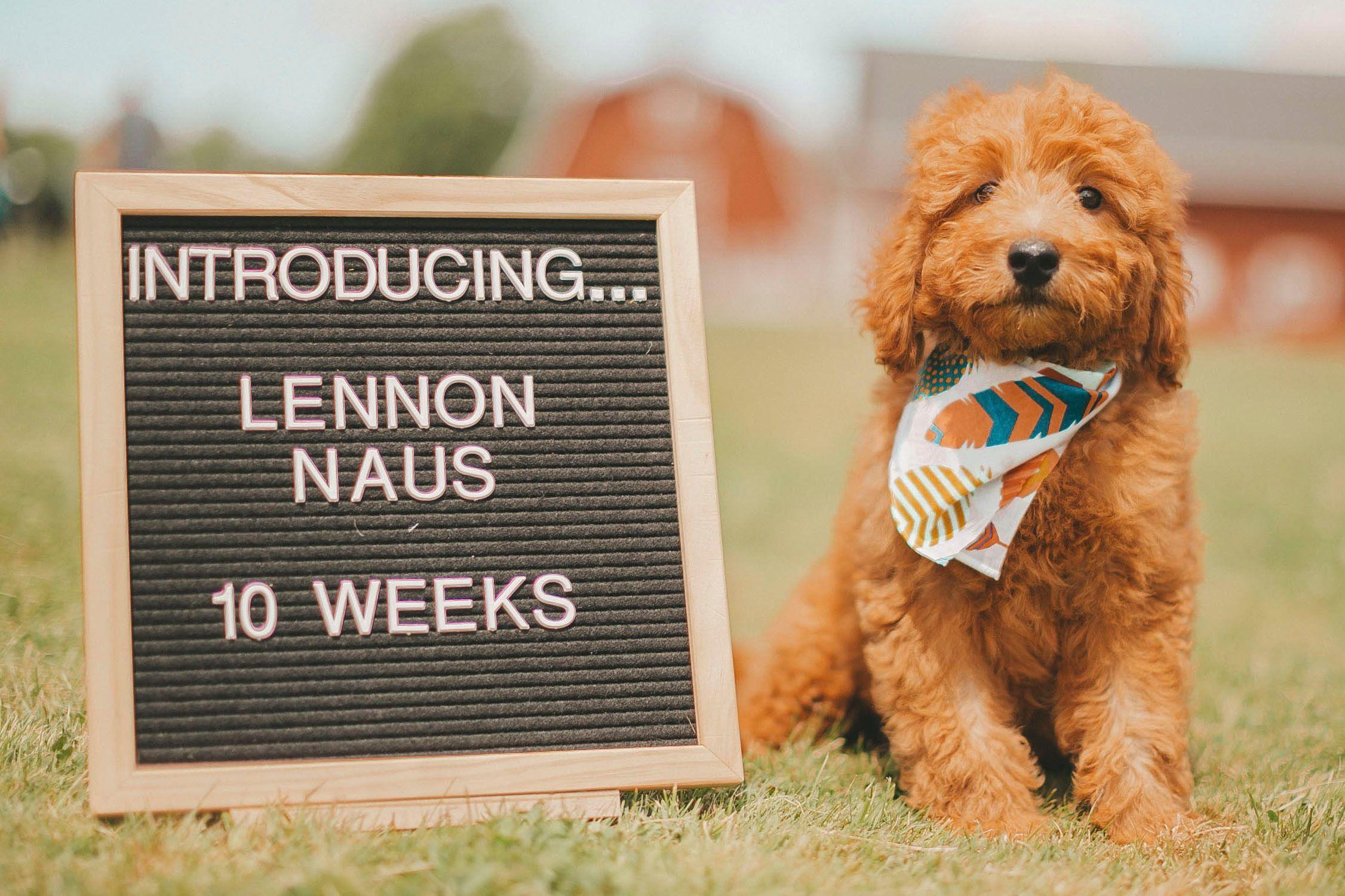 Puppy announcement gender reveal funnypuppyannouncements