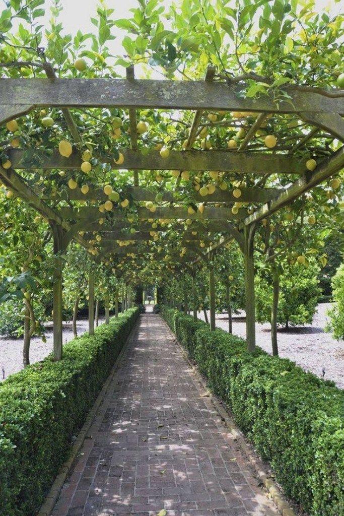 ✔ 37 gorgeous mediterranean garden design ideas for your backyard ideas 1 ~ aacmm.com -   12 garden design Mediterranean backyards ideas