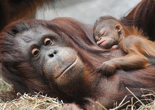 bebe, nenem, animal