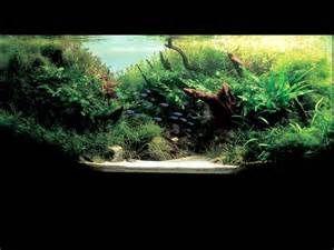Resultado de imagem para Amano Aquascape