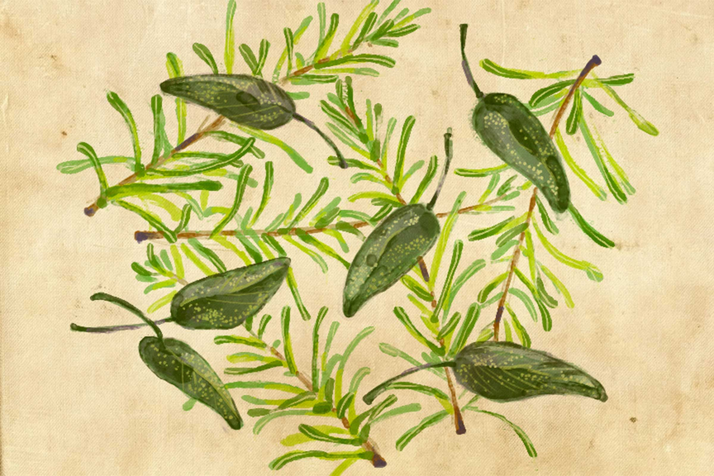 Companion Planting 7 Herbs That Can Make Other Plants 400 x 300