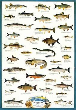 Pin By Lola Lazzara On Animals That I Love Freshwater Fish Fish Aquarium Fish