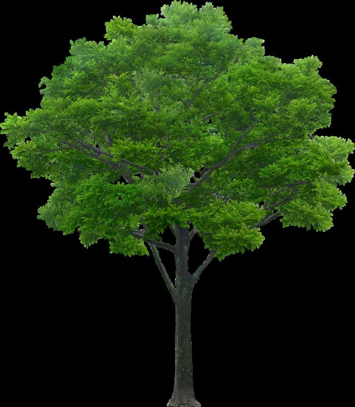 Анимация дерево картинки, картинке котах
