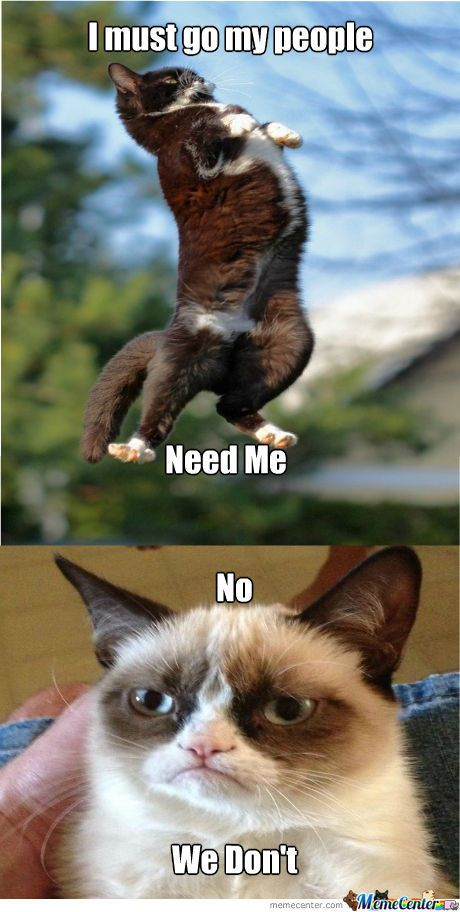 Meme Center Largest Creative Humor Community Grumpy Cat Funny Grumpy Cat Memes Funny Animal Jokes