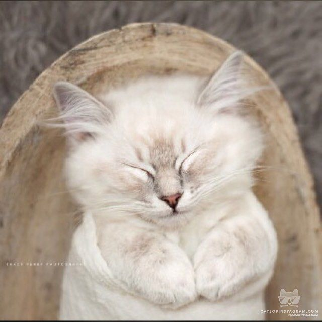 "From @tracy.comeau: ""Snug as a bug in a rug "" #catsofinstagram<< awwwww"