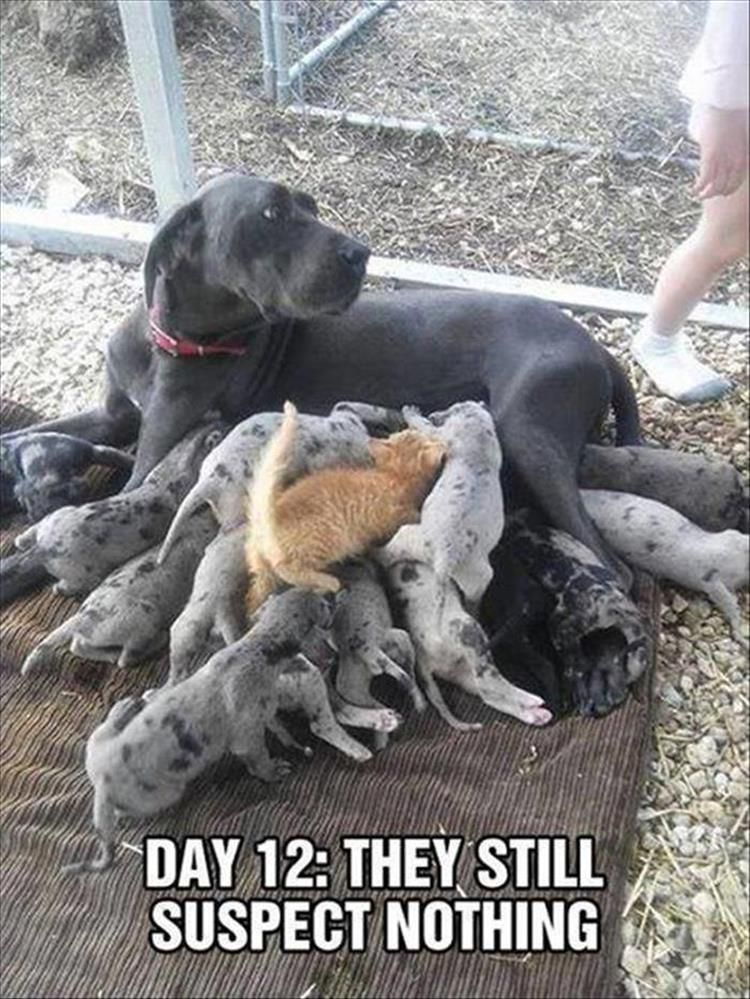 1 Funny Animal Pics for Your #Monday