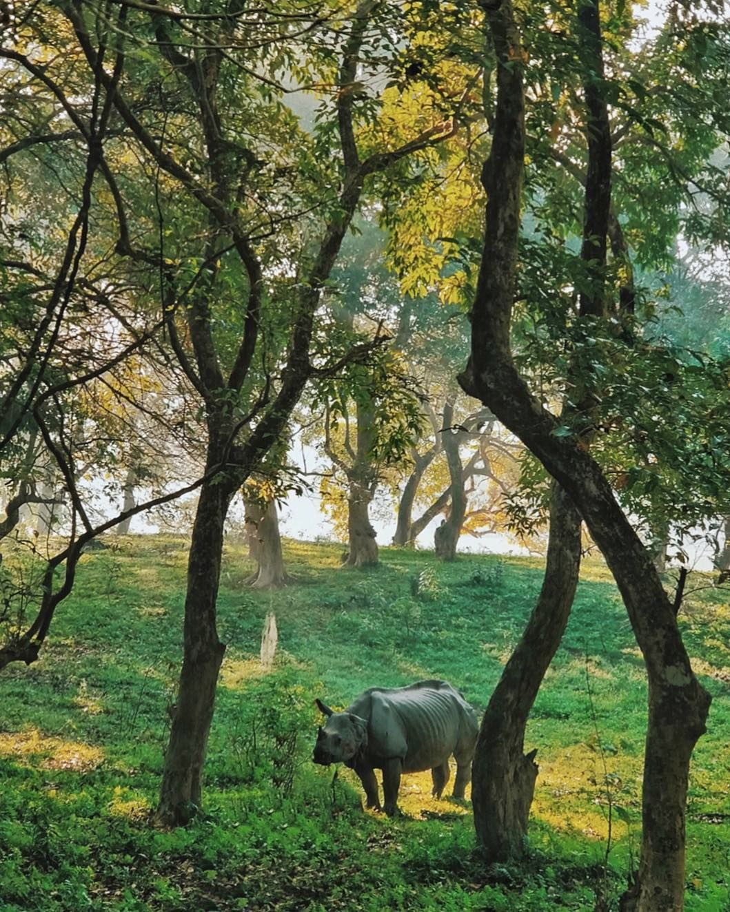 Kaziranga National Park National Parks Giant Animals Park Homes