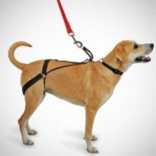 The Canine Tug Preventing Walking Harness For Dogs Was Invented By