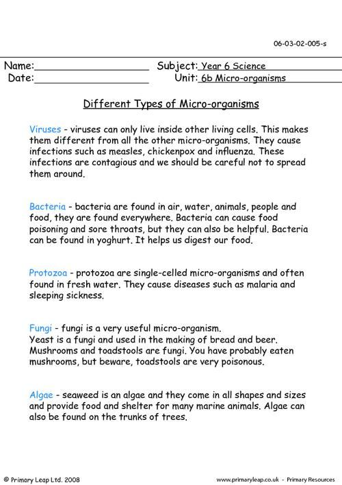 PrimaryLeap.co.uk - Different types of micro-organisms Worksheet ...