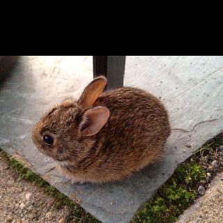 Cute baby bunny in my backyard | Cute baby bunnies